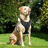 Best Front Range No-pull Dog Harnesses - Lifepul (Tm) Front Range No Pull Dog Vest Review
