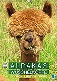 Alpakas: Wuschelköpfe - Edition lustige Tiere (Wandkalender 2019 DIN A3 hoch): Alpakas: Wollige Kleinkamele aus Südamerika (Monatskalender, 14 Seiten ) (CALVENDO Tiere)