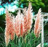 Shopmeeko 100 stücke Bunte Lilien pflanzen Schöne Indoor Bonsai Seltene Pflanzen Blumen Für Zuhause & amp; Garten-Diy-Blumentopfpflanzer: MIX