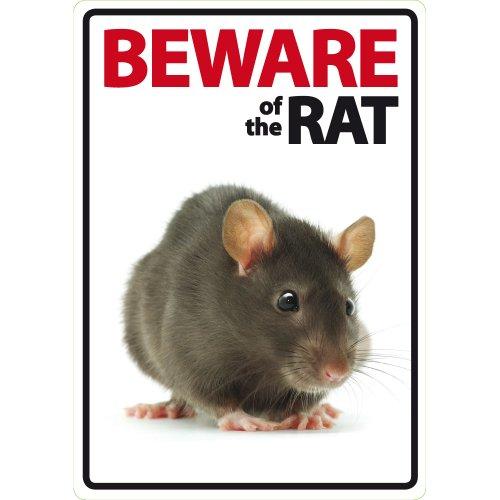 e of The Rat A5Schild ()
