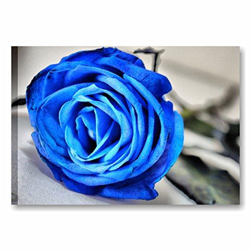Quadri l&c italia - rosa blu 3 quadro moderno artiginale 70 x50 cm stampa su tela da appendere natura fiori bianco e nero petali arredamento camera da letto soggiorno made in italy