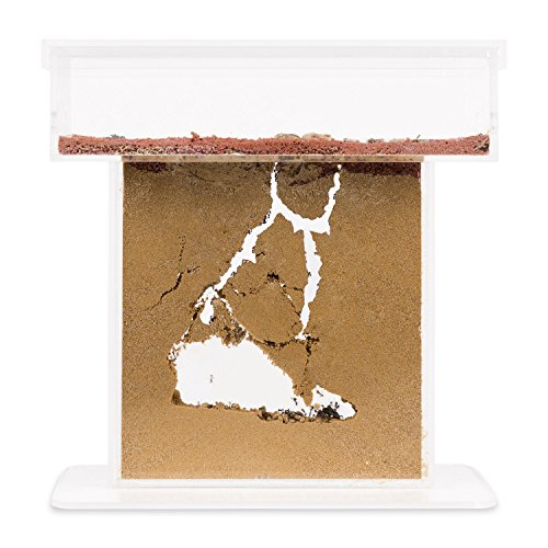 sand-ant-farm-t-with-free-ants-and-queen-formicarium