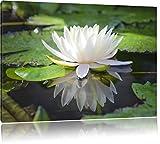 Weiße Lotusblume im Wasser, Format: 100x70 auf Leinwand, XXL riesige Bilder fertig gerahmt mit Keilrahmen, Kunstdruck auf Wandbild mit Rahmen, günstiger als Gemälde oder Ölbild, kein Poster oder Plakat