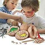 Womdee Kit d'excavation pour œufs de Dinosaures 3D avec T. Rex, Spinosaurus, tricératops, pour l'archéologie et la paléontologie et Les Enfants