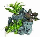 Scapers Rock Planty - Felsen mit Pflanzöffnungen für Wasserpflanzen