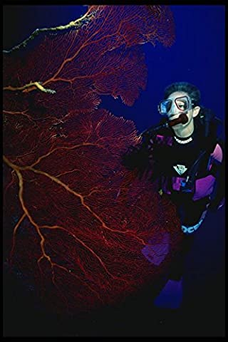 156039 Scuba Diver With Pacific Red Sea Fan A4 Photo Poster Print 10x8