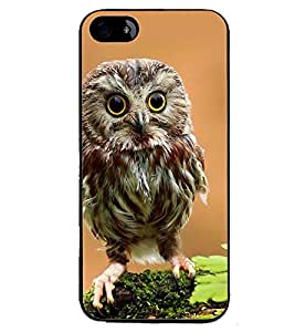 Printvisa Owl On A Tree Branch Back Case Cover for Apple iPhone 5S