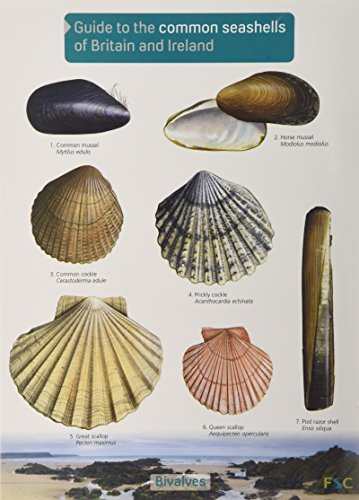 Guide to the Common Seashells of Britain and Ireland (Chart) Küsten-charts