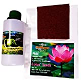 #10: PerFarmers 10 pcs Lotus Flower Seeds With Activator Liquid Organic Seed Starter