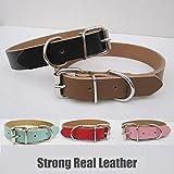 Starker Echt Leder Hundehalsband | Pet Cat Puppy | Tan Schwarz Pink Rot | Vier Größen