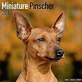 Miniature Pinscher Calendar 2018