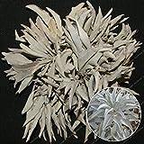HONIC 100Pcs California White Sage Bonsai Sacred Salvia Apiana Cerimoniale Aromatics Organico Erbe perenni Foglie Heirloom Naturale