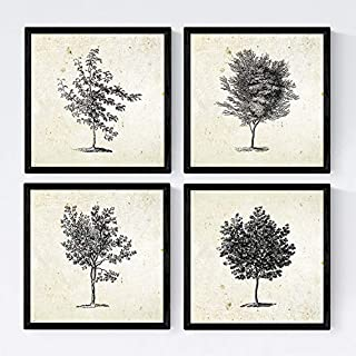 Nacnic Set of four sheets of trees. Arboleda in size 30x30 cm, vintage background old paper Poster paper 250 gr inks. Frameless