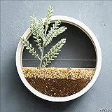 HRFHLHY Tentures murales créatives en Fer, présentoirs muraux Pots végétales écologiques Suspendus présentoir Multifonctionnel,White,20CM