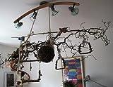 Große Korkenzieherhasel Sitzstange zum Aufhängen mit toll verschnörkelten Zweigen | Der wohl Beste Vogelspielplatz BZW. Spielzeug für Wellensittich, Nymphensittich, Kanarienvogel | Riesen Schaukel - 6