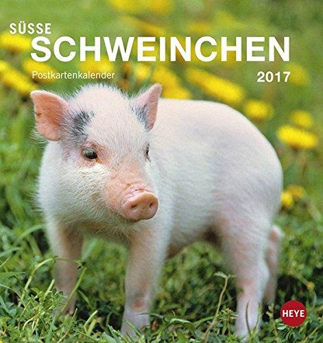 Süße Schweinchen 2017 Postkartenkalender