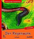 Der Regenwurm: Meine große Tierbibliothek