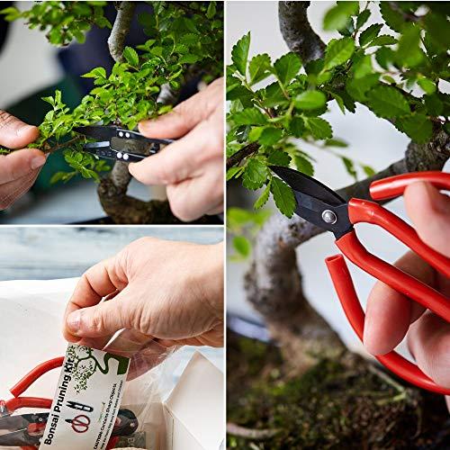 Zoom IMG-4 kit bonsai per crescere il