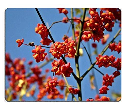 jun-xt-tapis-de-souris-kaki-persimon-kaki-fruit-arbre-en-caoutchouc-naturel-en-matiere-dimage-529436