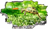 DesFoli Schildkröte Funny 3D Look Wandtattoo 70 x 115 cm Wanddurchbruch Wandbild Sticker Aufkleber C115