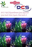 DCS(037) 5 Red Chrysanthemum Grass Aquar...
