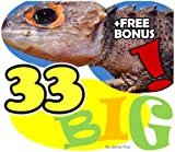 The 33 Largest Animals in the World (33 Animals | Animal Fact Books for Kids) (English Edition)