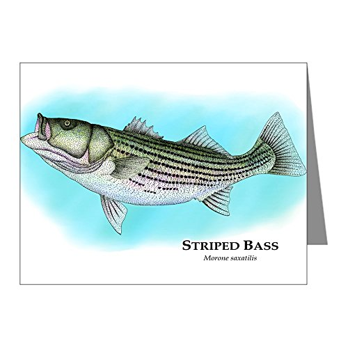 cafepress-striped-bass-note-cards-pk-of-20-note-cards-pk-of-20-glossy