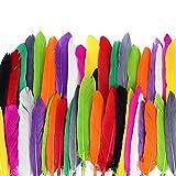 ewtshop 250 Naturfedern, 10 Verschiedene Farben, Federn Zum Basteln und zur Dekoration, Länge 10-15 cm