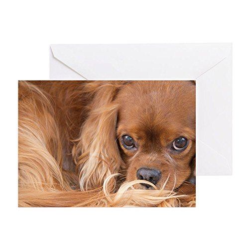 CafePress–Sweet friend Ruby Cavalier King Zeichen–Grußkarte, Note Karte, Geburtstagskarte, innen blanko, matt