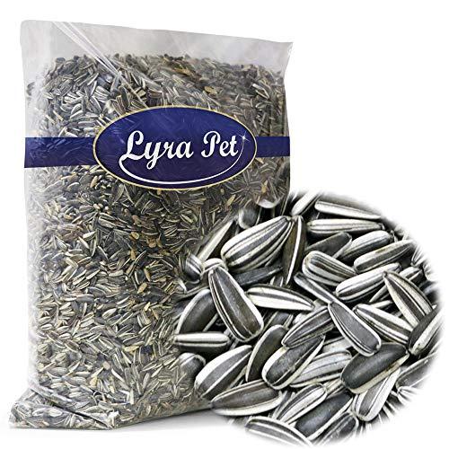 Lyra Pet 10 kg