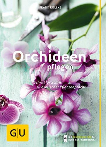 Orchideen Größe
