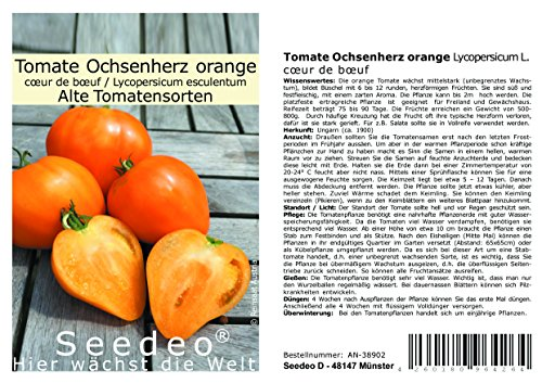 Seedeo® Tomate Ochsenherz orange (Lycopersicum L.) 20 Samen BIO