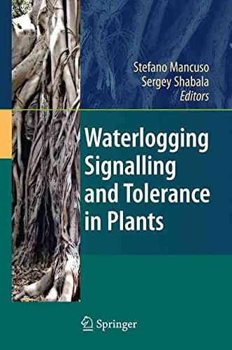 [(Waterlogging Signalling and Tolerance in Plants)] [Edited by Stefano Mancuso ] published on (May, 2010)