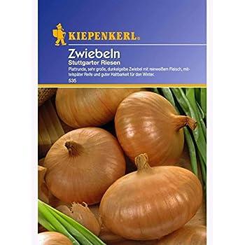 Kiepenkerl  Stuttgarter Riesen  Zwiebeln  gut lagerfähig  Samen Saatgut