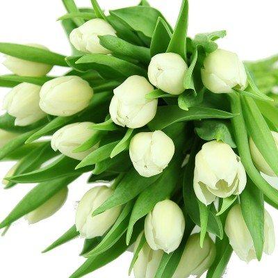 floristikvergleich.de Echte weiße Tulpen im Bund – Frühlingsblumen