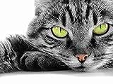Sticker Skin o muestra grande-Póster, diseño de gato con carrito an_00038 ojos, color verde, adhesivo, 29,7 x 42 cm (A3)