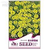 Pinkdose® 2018 vendita calda giallo spezia palla di neve semi di fiori, pacchetto originale, 50 semi, qualità semi di fiori in vaso semi di fiori ornamentali a171