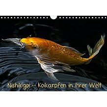Nishikigoi – Koikarpfen in ihrer Welt (Wandkalender 2017 DIN A4 quer): Koikarpfen noch einmal zum genießen (Monatskalender, 14 Seiten ) (CALVENDO Tiere)