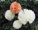 Saitec ® 12PCS Mixed Sizes Peach...