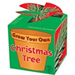 Tobar Grow Your Own Christmas Tree
