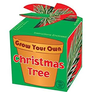 Tobar Grow Your Own Christmas Tree