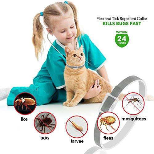 Collier anti-puces pour chien - 6mois de protection anti-puces et de contrôle des tiques - Pour chiens chats - Taille réglable et étanche - Arrête les piqûres des parasites et les démangeaisons