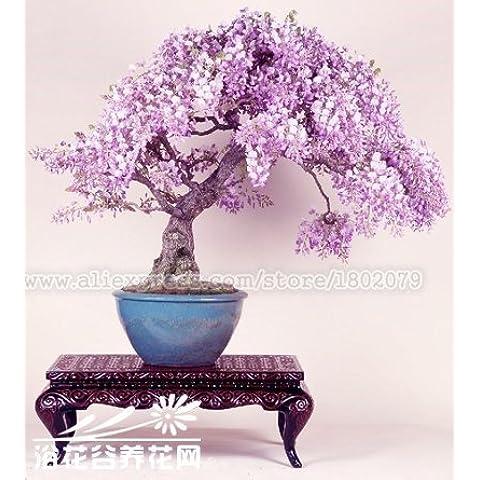 20PCS rari giapponesi semi di albero bonsai glicine, semi di fiori in vaso, piante ornamentali perenni coperto per fai da te casa e giardino