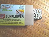 #1: VegOChef DryFruit SunFlower Energy Bar, Pack of 6, Healthy Snack, Meal Replacement, MidMeal