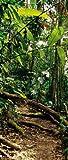 style-your-door Foto-Plane für Innentüren, Rain Forest 90 cm x 210 cm