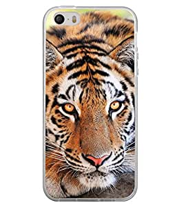ifasho Designer Back Case Cover for Apple iPhone 5 (Tiger Crunch Tiger Dress For Boys Tiger Biscuit)