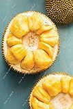 fruits jacquier Graines Fruit bonsaï graines d'arbres graines de fruits biologiques peuvent 5pcs jacquier comestibles / sac