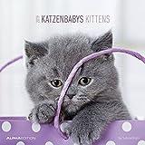 Katzenbabys 2019: by Sabine Rath