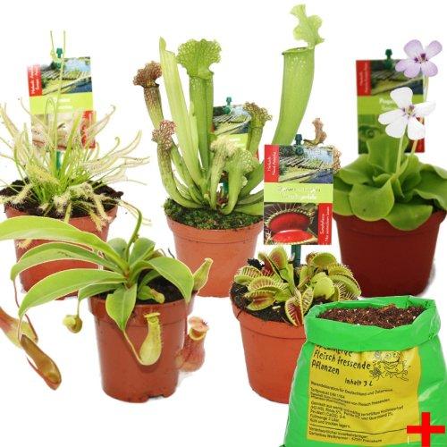 Kit de démarrage des plantes carnivores - 5 + terre - terre de Carnivore