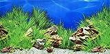 Mascota verde pistacho-doble cara fondo Acuario Póster, 48x 100cm